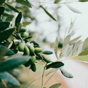 オリーブオイルは便秘解消に効果的な成分(オレイン酸)が豊富!妊娠中や子供にもおすすめ